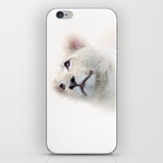 White Lion Cub iPhone & iPod Skin