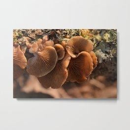 Among the Mushrooms 1 Metal Print