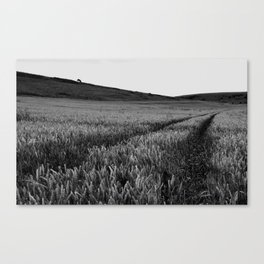 Black and white field Canvas Print