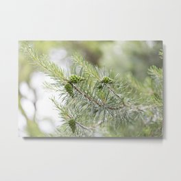 Pine Cone 3 Metal Print