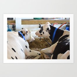 Pair Of Black And White Cows 2 Art Print