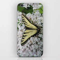 Butterfly Delight iPhone & iPod Skin