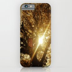 Sunset Behind the Tree iPhone 6s Slim Case