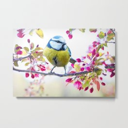 Romantic Flower Blossom with blue tit spring bird Metal Print