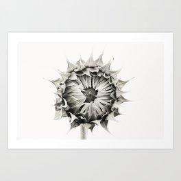 Sunflower No. 9 Art Print
