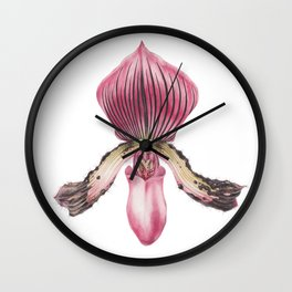 Flower - PAPHIOPEDILUM ACMODONTUM - Pointed Tooth Orchid By Magda Opoka Wall Clock