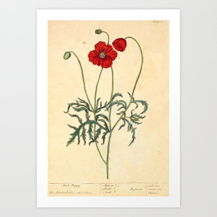 """Red Poppy by Elizabeth Blackwell from """"A Curious Herbal,"""" 1737 (benefits The Nature Conservancy) Art Print"""