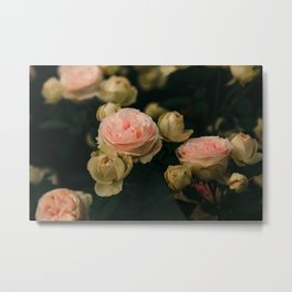 Korean Roses Metal Print