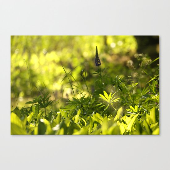 In The Summer Forest  Canvas Print