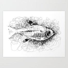 Fish - X Ray Tetra Art Print