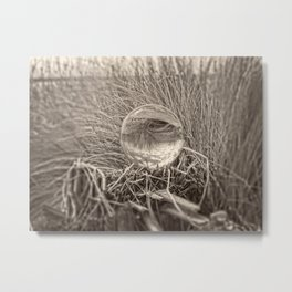 Crystal Ball, Lens Ball in Grass by the Ocean, Sepia Metal Print