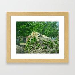 sleepy old lion Framed Art Print