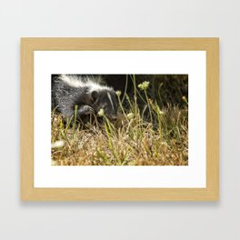 Release of a Young Skunk Framed Art Print