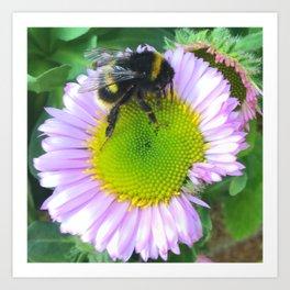 Bees love purple daisies Art Print