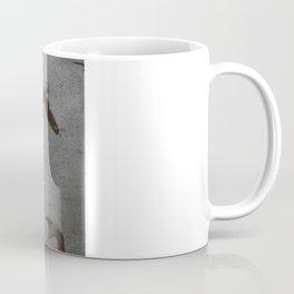swallows Coffee Mug