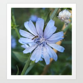 Little blue flower and bee Art Print