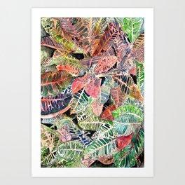 botanical art Art Print