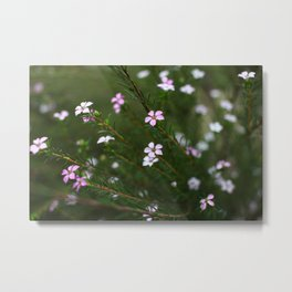 Little nature signs Metal Print