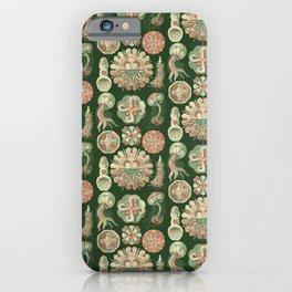 Ernst Haeckel Discomedusae Jellyfish iPhone Case