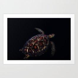 turtle shell Art Print