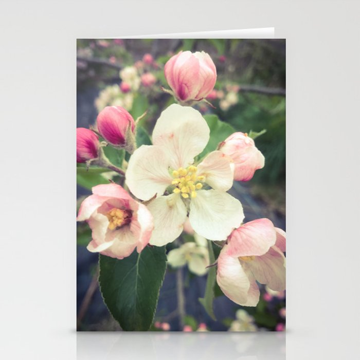 beautiful apple blossom Stationery Cards