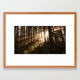 Redwood Sunrise Framed Art Print