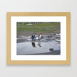 More King Penguin Reflections Framed Art Print