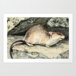 Fuertes, Louis Agassiz (1874-1927) - Burgess Animal Book for Children 1920 (Wood Rat) Art Print