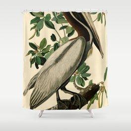 Brown Pelican (Pelecanus occidentalis) Scientific Illustration Shower Curtain