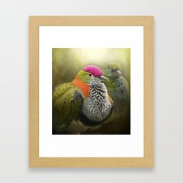Superb Fruit Dove Framed Art Print