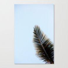 Palmera Canvas Print