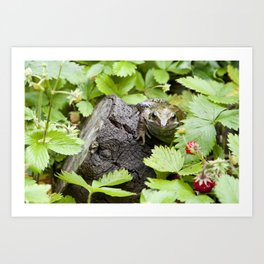 Toad with strawberries Art Print