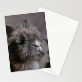 Little Bunny - Pancake Stationery Cards