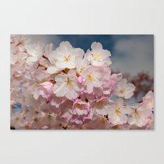 Springtime Cherry Blossoms Canvas Print