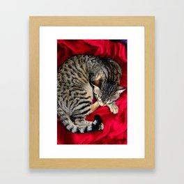 Cute Tabby Cat napping Framed Art Print