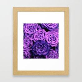 Purple Roses Framed Art Print