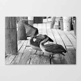 Juvenile Brown Pelican Tale 3 Canvas Print
