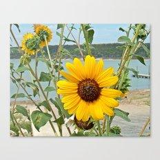 Grabbing some sun Canvas Print