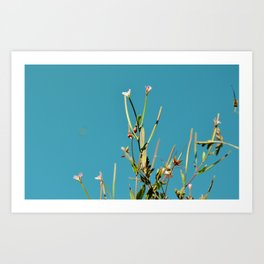 A Summer Sky Art Print