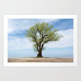 tree on the water Art Print