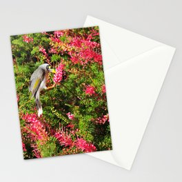 Noisy Miner Stationery Cards