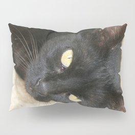 Beautiful Black Cat Portrait  Pillow Sham