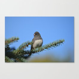 Backyard Beauty Canvas Print