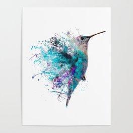 HUMMING BIRD SPLASH Poster