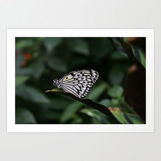 Butterfly House 1 Art Print