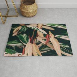 Stromanthe Triostar Rug