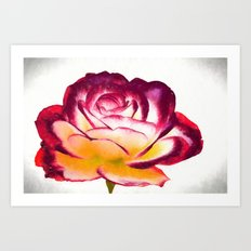 isolated roses in the garde Art Print