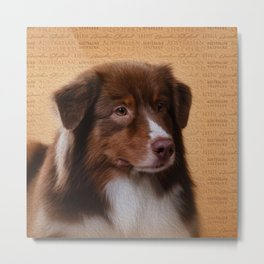Australian Shepherd  Aussie Digital Art Metal Print