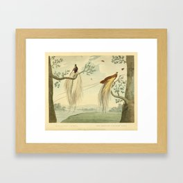 """The Greater Paradise Bird"" from the collection of the Leverian Museum, 1790s Framed Art Print"