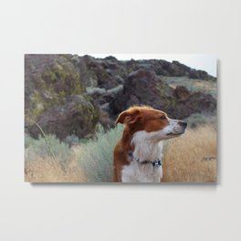 Day Dreaming Dog Metal Print